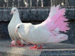 другие сны о голубях