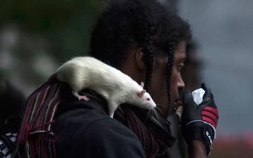 Приснились крысы мужчине