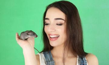 Приснились крысы женщине